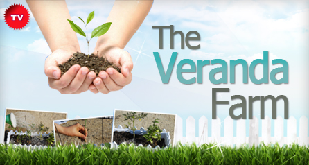 The Veranda Farm