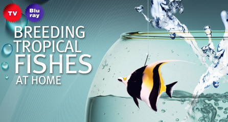 Breeding tropical fishes at home
